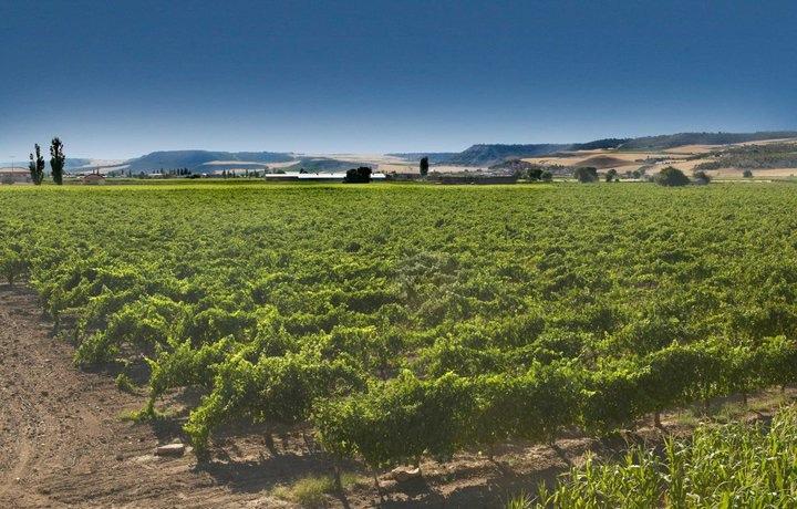 Wijngaarden La Cepa Alta