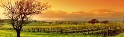 Wijn uit Central Valley