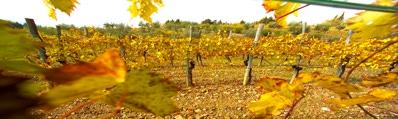 Wijn uit La Mancha