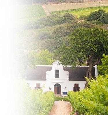 Wijngaarden Stellenbosch